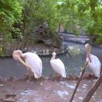 VOC Park and Zoo coimbatore Tamil Nadu